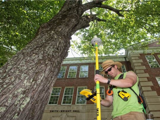 Arborist Consultations-Lauderdale Lakes FL Tree Trimming and Stump Grinding Services-We Offer Tree Trimming Services, Tree Removal, Tree Pruning, Tree Cutting, Residential and Commercial Tree Trimming Services, Storm Damage, Emergency Tree Removal, Land Clearing, Tree Companies, Tree Care Service, Stump Grinding, and we're the Best Tree Trimming Company Near You Guaranteed!