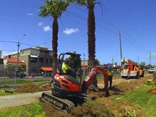 Palm Tree Removal-Lauderdale Lakes FL Tree Trimming and Stump Grinding Services-We Offer Tree Trimming Services, Tree Removal, Tree Pruning, Tree Cutting, Residential and Commercial Tree Trimming Services, Storm Damage, Emergency Tree Removal, Land Clearing, Tree Companies, Tree Care Service, Stump Grinding, and we're the Best Tree Trimming Company Near You Guaranteed!