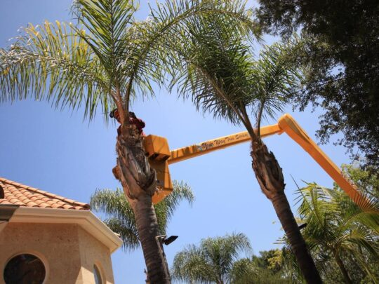 Palm Tree Trimming-Lauderdale Lakes FL Tree Trimming and Stump Grinding Services-We Offer Tree Trimming Services, Tree Removal, Tree Pruning, Tree Cutting, Residential and Commercial Tree Trimming Services, Storm Damage, Emergency Tree Removal, Land Clearing, Tree Companies, Tree Care Service, Stump Grinding, and we're the Best Tree Trimming Company Near You Guaranteed!