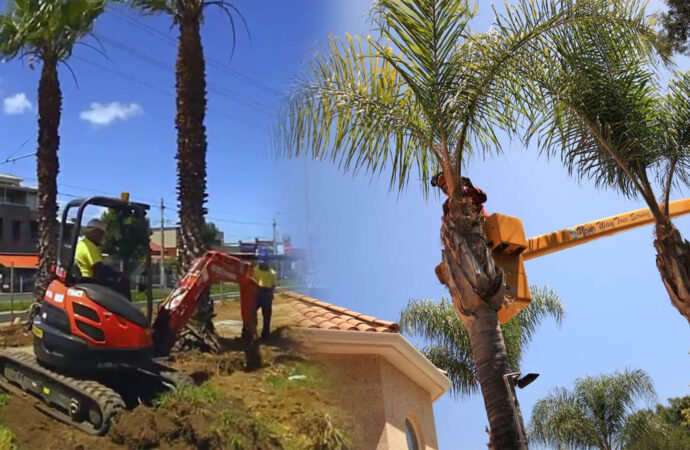 Palm tree trimming & palm tree removal-Lauderdale Lakes FL Tree Trimming and Stump Grinding Services-We Offer Tree Trimming Services, Tree Removal, Tree Pruning, Tree Cutting, Residential and Commercial Tree Trimming Services, Storm Damage, Emergency Tree Removal, Land Clearing, Tree Companies, Tree Care Service, Stump Grinding, and we're the Best Tree Trimming Company Near You Guaranteed!
