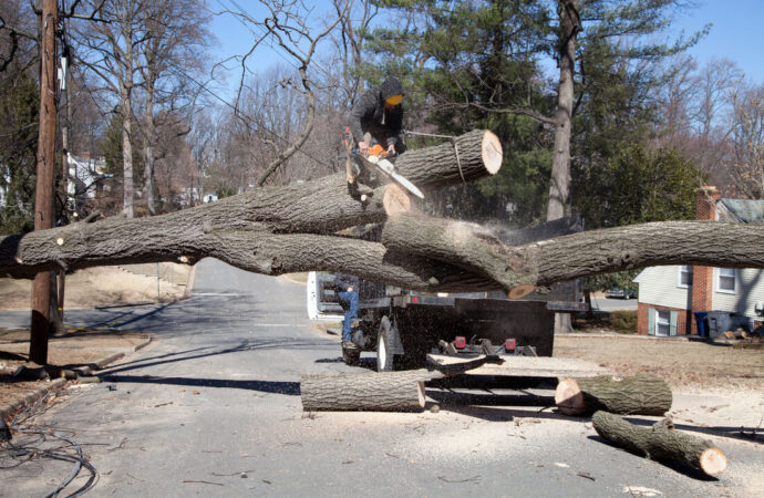 Residential Tree Services-Lauderdale Lakes FL Tree Trimming and Stump Grinding Services-We Offer Tree Trimming Services, Tree Removal, Tree Pruning, Tree Cutting, Residential and Commercial Tree Trimming Services, Storm Damage, Emergency Tree Removal, Land Clearing, Tree Companies, Tree Care Service, Stump Grinding, and we're the Best Tree Trimming Company Near You Guaranteed!