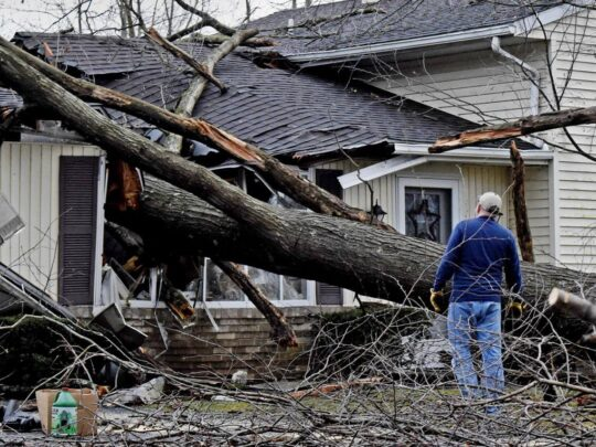 Storm Damage-Lauderdale Lakes FL Tree Trimming and Stump Grinding Services-We Offer Tree Trimming Services, Tree Removal, Tree Pruning, Tree Cutting, Residential and Commercial Tree Trimming Services, Storm Damage, Emergency Tree Removal, Land Clearing, Tree Companies, Tree Care Service, Stump Grinding, and we're the Best Tree Trimming Company Near You Guaranteed!
