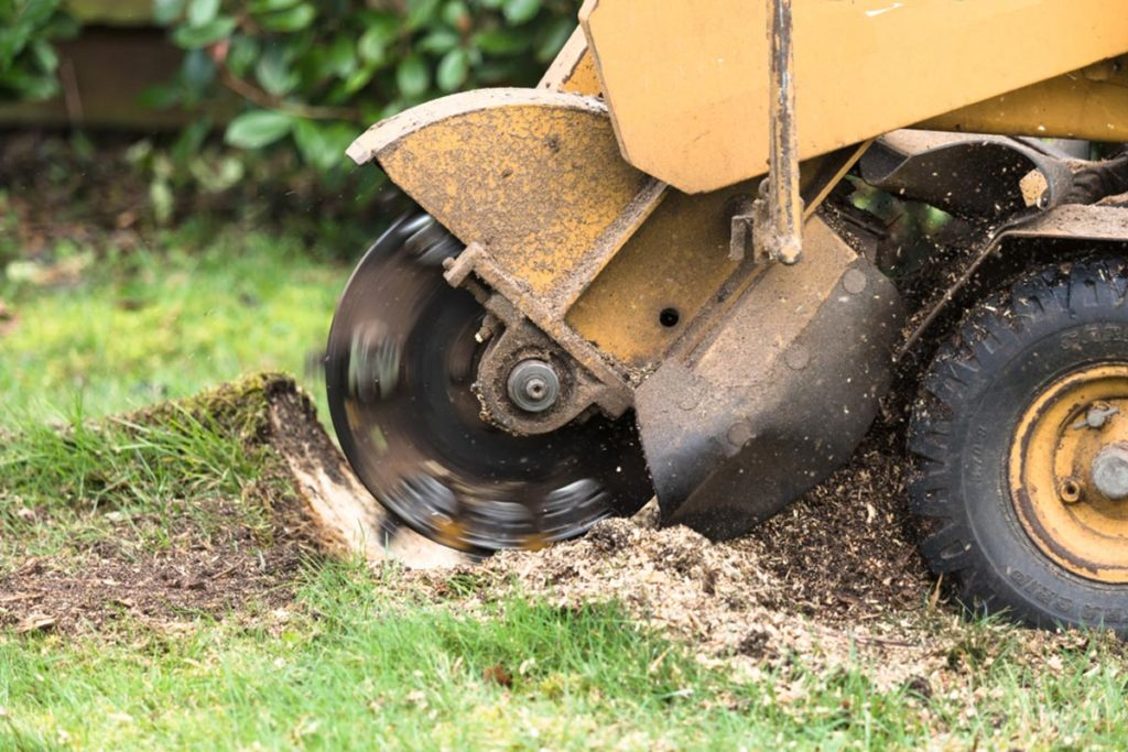 Stump Grinding-Lauderdale Lakes FL Tree Trimming and Stump Grinding Services-We Offer Tree Trimming Services, Tree Removal, Tree Pruning, Tree Cutting, Residential and Commercial Tree Trimming Services, Storm Damage, Emergency Tree Removal, Land Clearing, Tree Companies, Tree Care Service, Stump Grinding, and we're the Best Tree Trimming Company Near You Guaranteed!