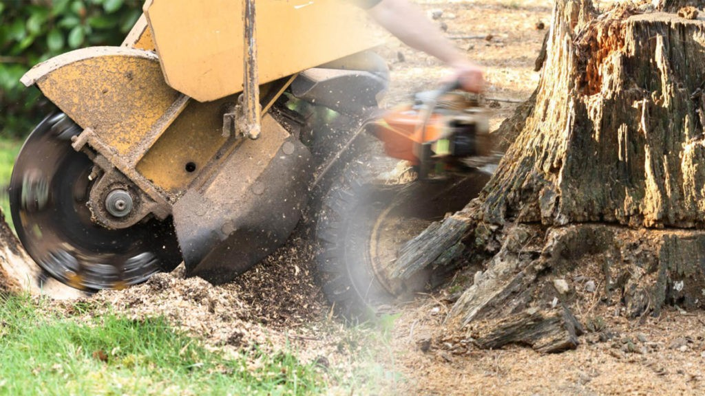 Stump grinding & removal-Lauderdale Lakes FL Tree Trimming and Stump Grinding Services-We Offer Tree Trimming Services, Tree Removal, Tree Pruning, Tree Cutting, Residential and Commercial Tree Trimming Services, Storm Damage, Emergency Tree Removal, Land Clearing, Tree Companies, Tree Care Service, Stump Grinding, and we're the Best Tree Trimming Company Near You Guaranteed!