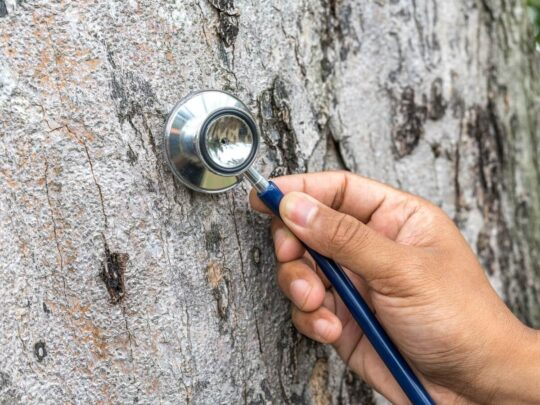 Tree Assessments-Lauderdale Lakes FL Tree Trimming and Stump Grinding Services-We Offer Tree Trimming Services, Tree Removal, Tree Pruning, Tree Cutting, Residential and Commercial Tree Trimming Services, Storm Damage, Emergency Tree Removal, Land Clearing, Tree Companies, Tree Care Service, Stump Grinding, and we're the Best Tree Trimming Company Near You Guaranteed!