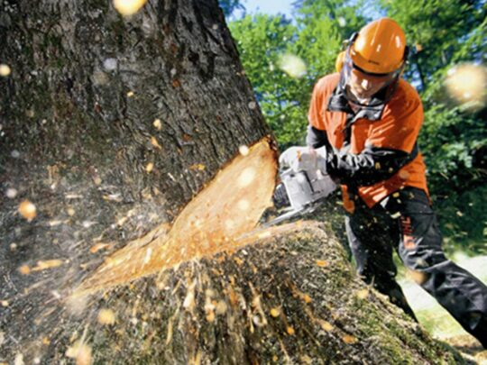 Tree Cutting-Lauderdale Lakes FL Tree Trimming and Stump Grinding Services-We Offer Tree Trimming Services, Tree Removal, Tree Pruning, Tree Cutting, Residential and Commercial Tree Trimming Services, Storm Damage, Emergency Tree Removal, Land Clearing, Tree Companies, Tree Care Service, Stump Grinding, and we're the Best Tree Trimming Company Near You Guaranteed!