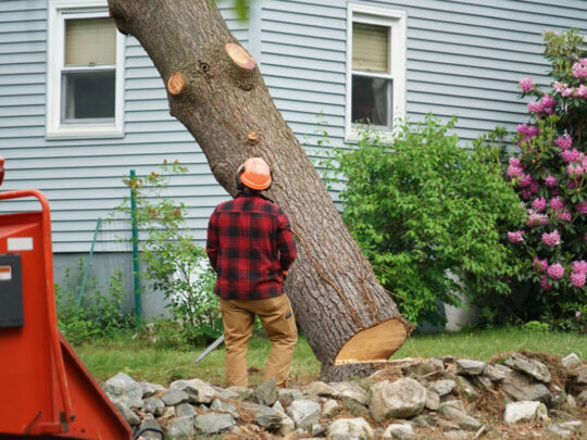 Tree Removal-Lauderdale Lakes FL Tree Trimming and Stump Grinding Services-We Offer Tree Trimming Services, Tree Removal, Tree Pruning, Tree Cutting, Residential and Commercial Tree Trimming Services, Storm Damage, Emergency Tree Removal, Land Clearing, Tree Companies, Tree Care Service, Stump Grinding, and we're the Best Tree Trimming Company Near You Guaranteed!