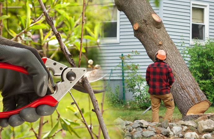 Tree pruning & tree removal-Lauderdale Lakes FL Tree Trimming and Stump Grinding Services-We Offer Tree Trimming Services, Tree Removal, Tree Pruning, Tree Cutting, Residential and Commercial Tree Trimming Services, Storm Damage, Emergency Tree Removal, Land Clearing, Tree Companies, Tree Care Service, Stump Grinding, and we're the Best Tree Trimming Company Near You Guaranteed!